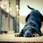Lenguaje canino: cómo saber qué nos dice nuestro amigo perruno
